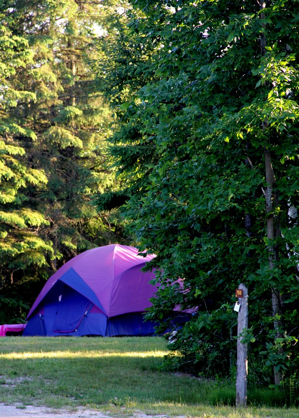 Photo of a tent site at Mackinaw Mill Creek Camping in Mackinaw City, MI. © 2016 Frank Rogala.