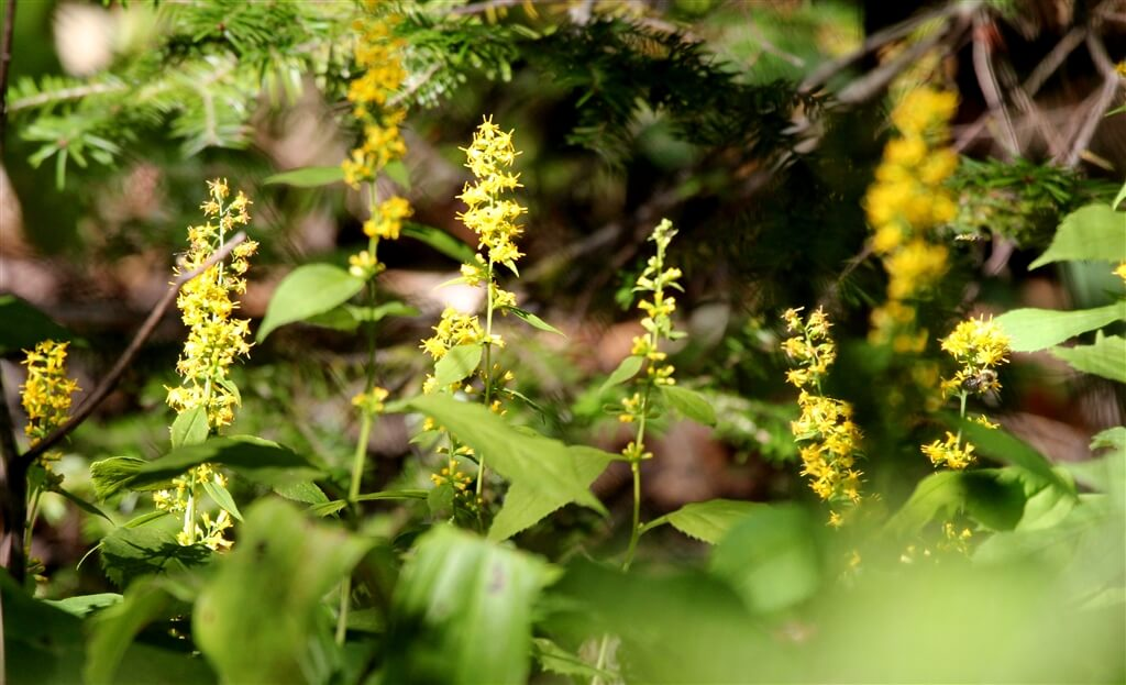 Photo of wildflowers on Mackinac Island. © 2016 Frank Rogala.