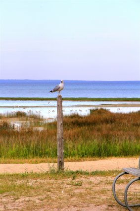 Photo of a seagull on a post at Mackinaw Mill Creek Camping in Mackinaw City, MI. © 2016 Frank Rogala.