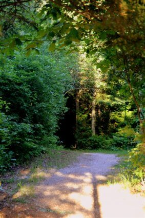 Photo of a hiking trail at Mackinaw Mill Creek Camping in Mackinaw City, MI. © 2016 Frank Rogala.