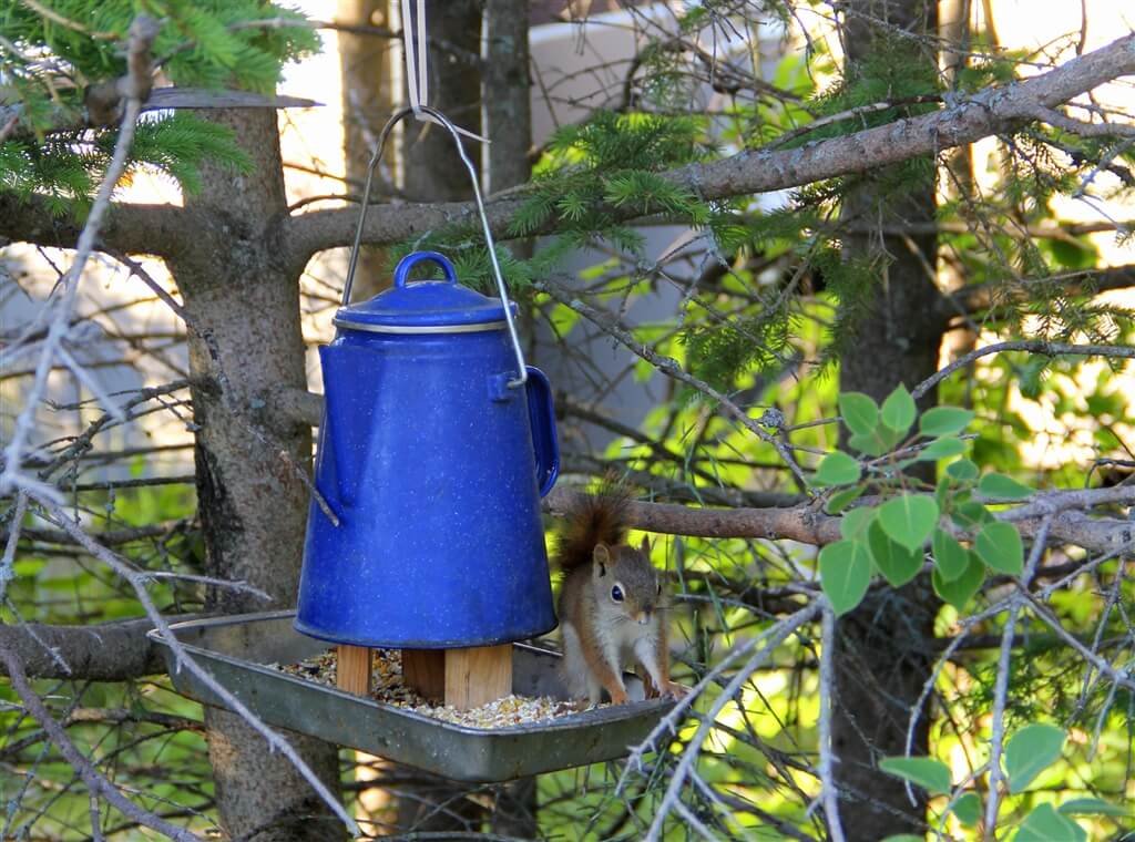 Photo of a squirrel eating from a squirrel feeder at Mackinaw Mill Creek Camping in Mackinaw City, MI. © 2016 Frank Rogala.