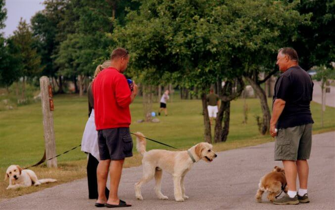 Photo of campers walking their dogs at Mackinaw Mill Creek Camping in Mackinaw City, MI. © 2016 Frank Rogala.
