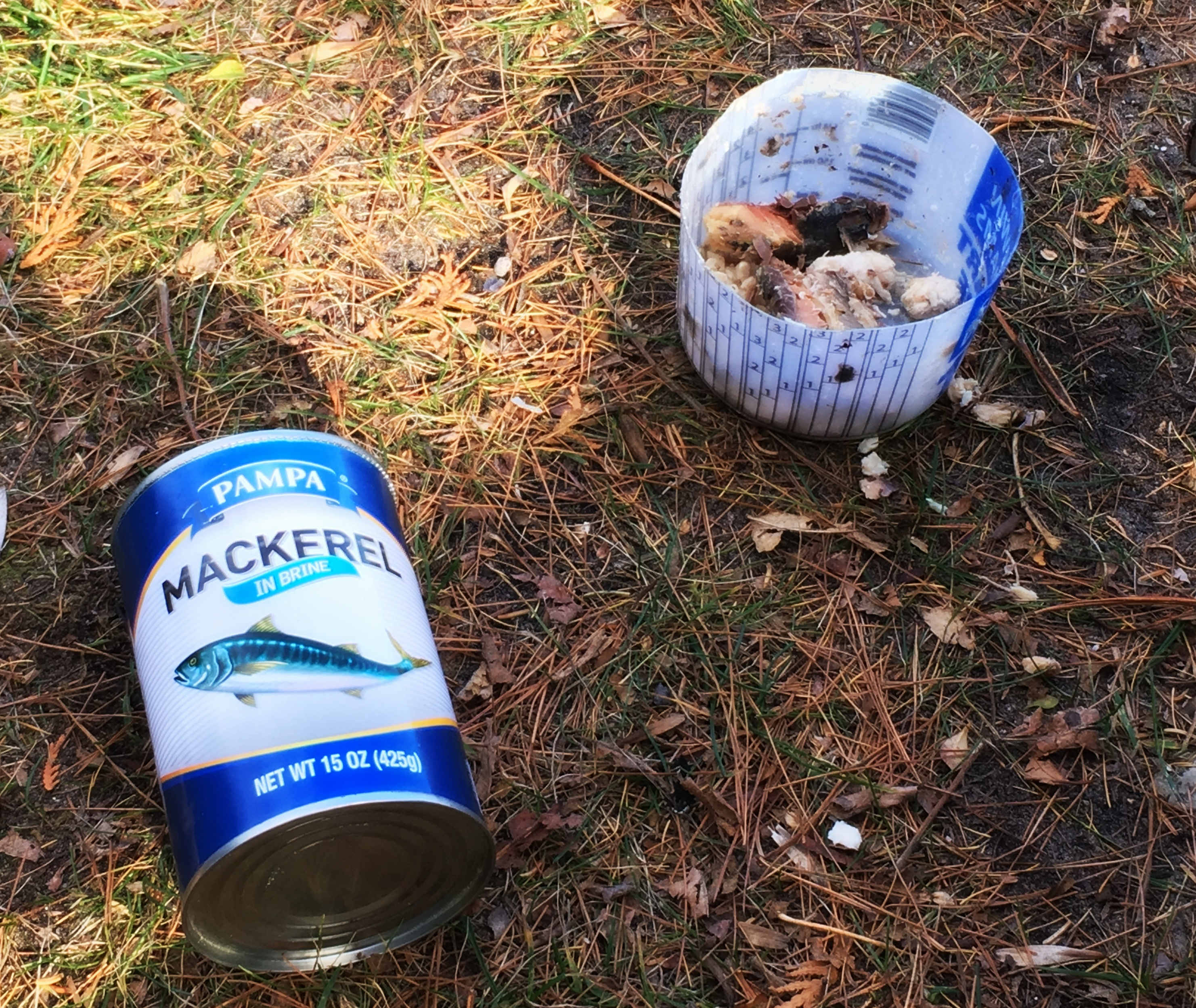 Canned Mackerel as bait